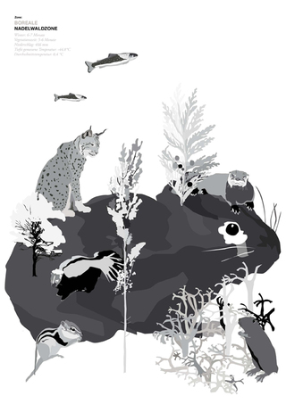 landnutzung borealer nadelwald